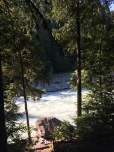 river through trees